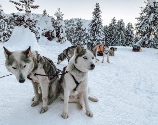 Huskies Passo delle Erbe, Sleddog nelle Dolomiti