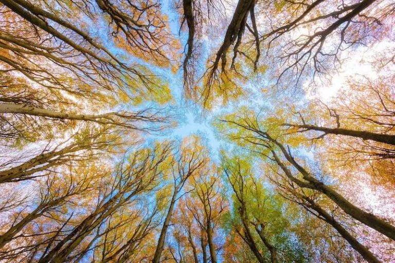 Foresta vista dal basso