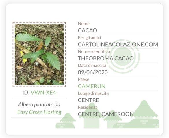 certificato adozione albero con sito green